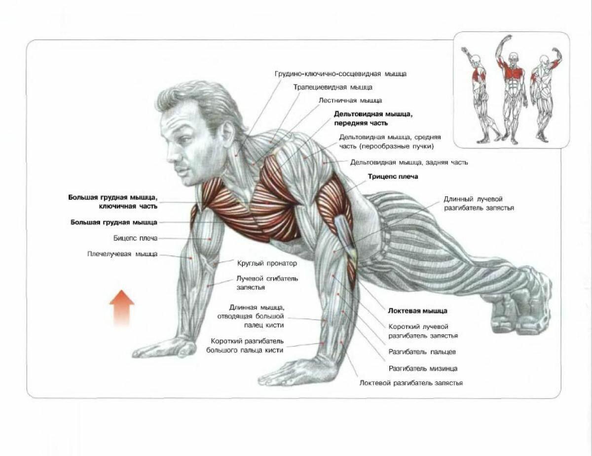 Накачать мышци домашних условиях