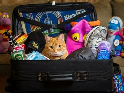 Как уместить вещи всей семьи в один чемодан