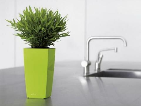 Какие растения очищают воздух в доме